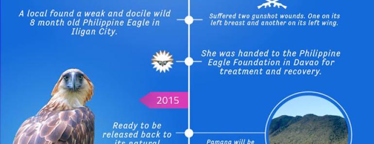 philippine eagle pamana fly free