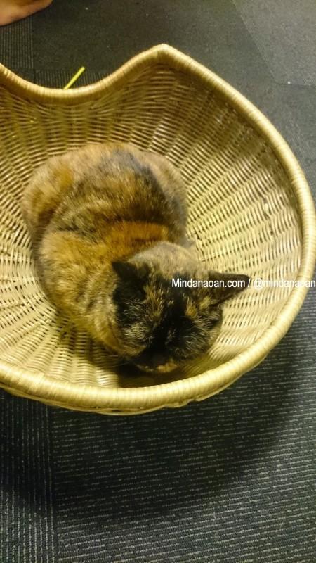 Cat Cafe Calico Shinjuku Tokyo Japan