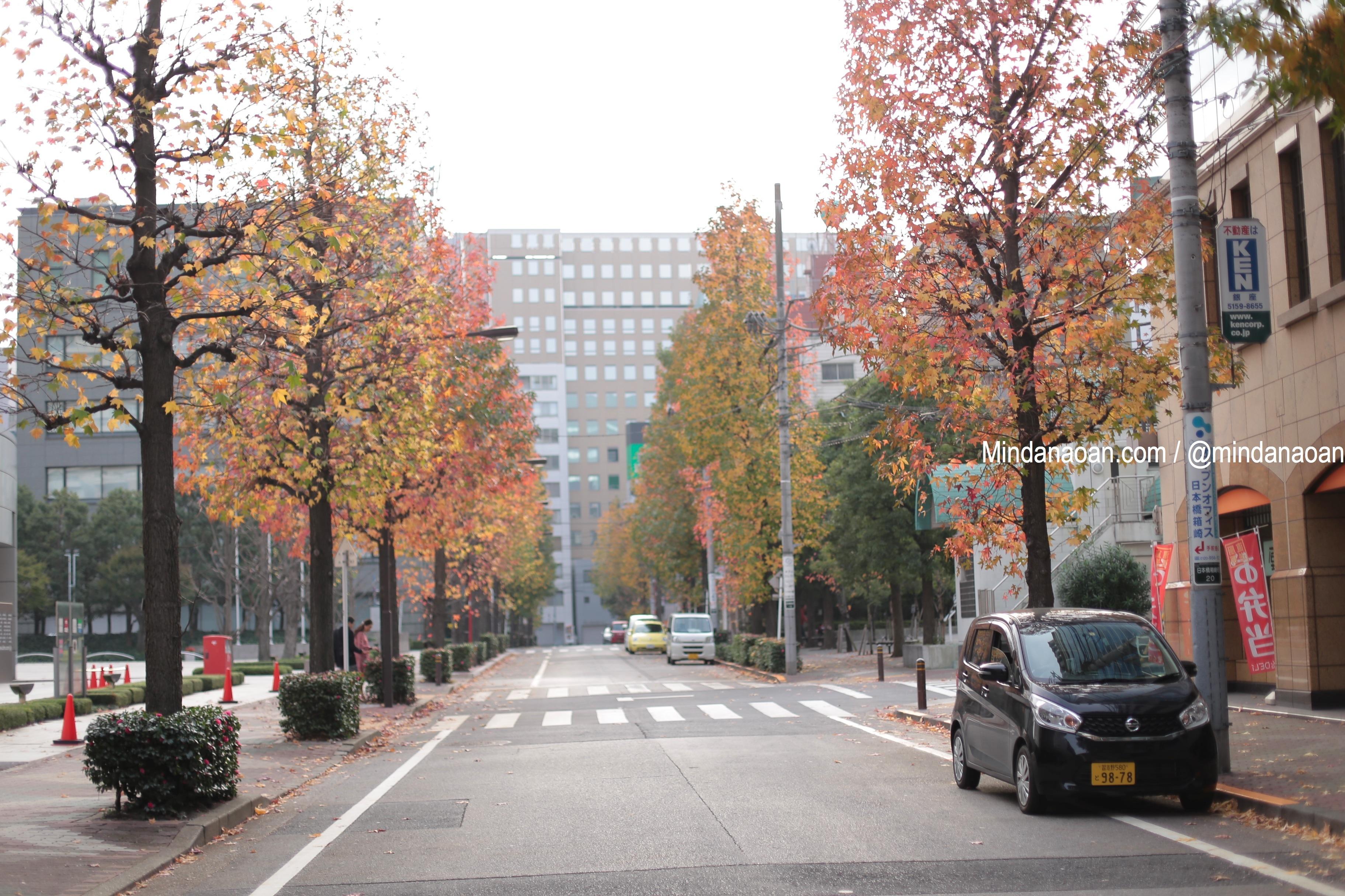 Where To Stay In Tokyo #Japan : Oak Hostel Cabin #travel