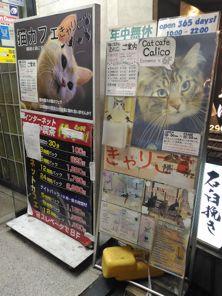 calico cat cafe tokyo 13