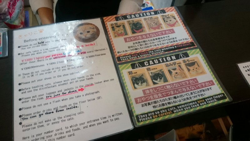 calico cat cafe tokyo
