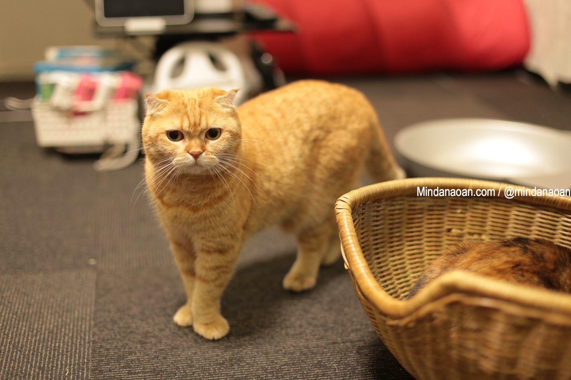 Cat Cafe Calico in Shinjuku, Tokyo, Japan