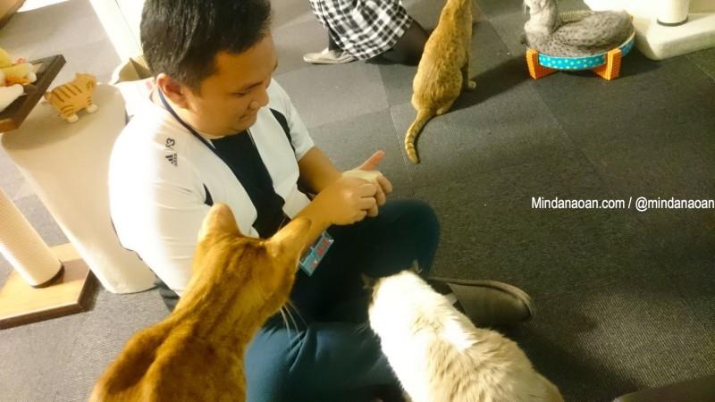 calico-cat-cafe-tokyo-calico cat cafe tokyo 14