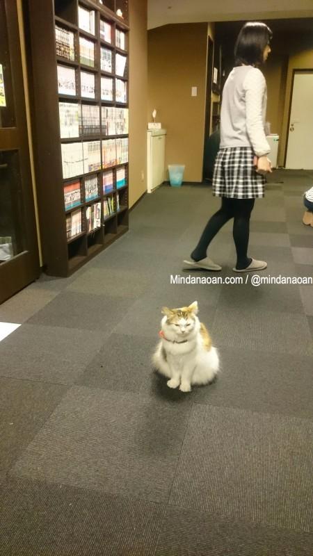 calico-cat-cafe-tokyo-calico cat cafe tokyo 4