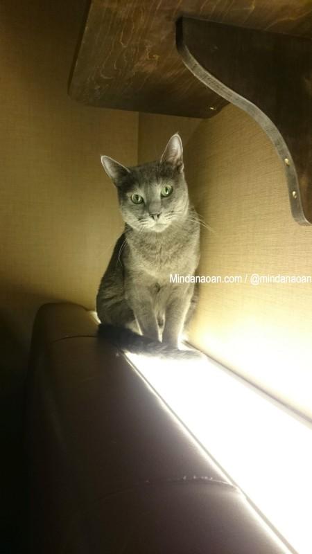 calico-cat-cafe-tokyo-calico cat cafe tokyo 6